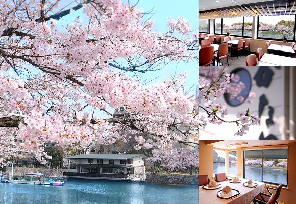 メルマガ-桜